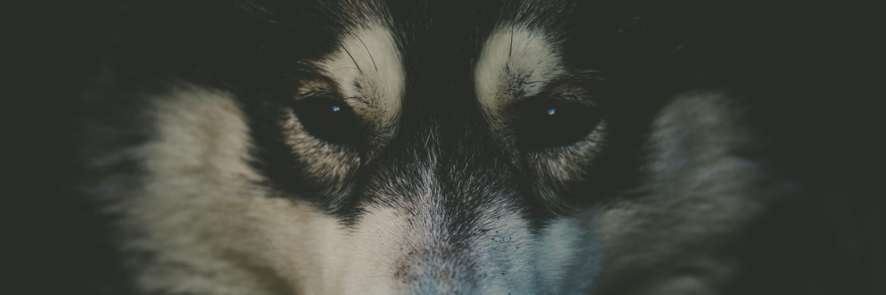 Borealis Sled Dog Adventures